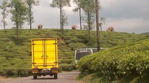 elefantes-india-ncf